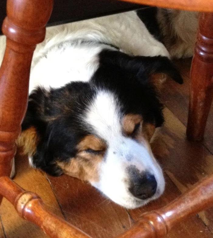 Sam under a chair, finding a quiet spot
